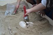 Simulação de Escavação Arqueológicas na Escola General Mitre (4)