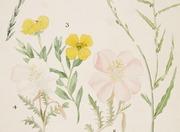 Summer Studio: Plants and Pollinators
