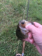One of two small Bass
