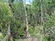 Dry swamp, Loop Road