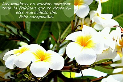 Tarjetas de Cumpleaños con Flores 16