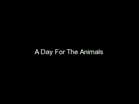 A Day For The Animals