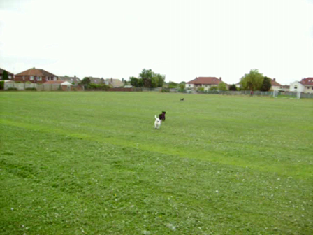 Tilly, Charlie and Penny playing on field, May 08.