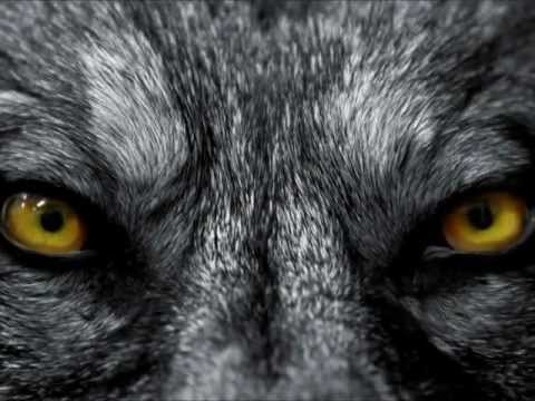 http://www.amazon.com/dp/B0077F0DFI The Wolf's Moon by Patrick Jones Book Trailer 02212013