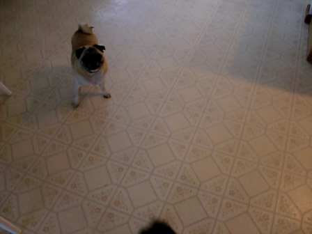 Pug Day Care-June 2011-intros