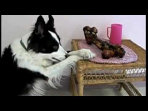 The Best of Dogs Saying Grace Before Meal    Cute Videos
