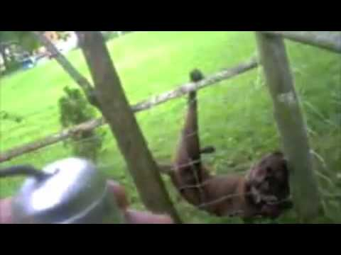 Dog Surprises Officer After Being Freed From A Fence