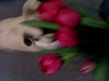Ains licking Jez's flowers