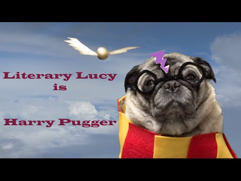 Literary Lucy Ep. 8: Harry Pugger ~CUTE PUG!