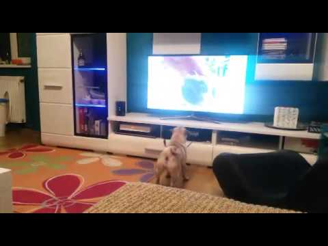 Bonnie vs animals on TV