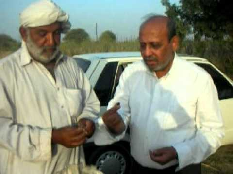Jatropha    Pakistan  buy saplings  EES Farm at Gadap Pakistan by Salim mastan