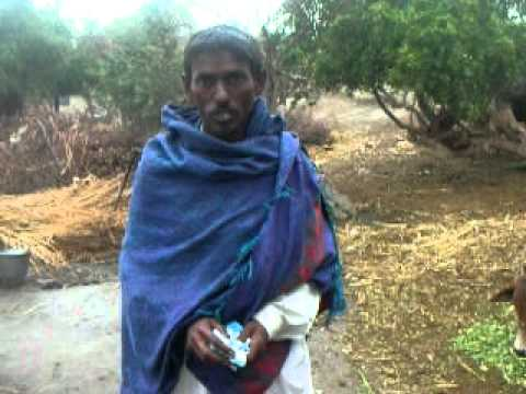 Jatropha  poverty  does not look at religon  by salim mastan (EES) Jatropha Farm in Pakistan
