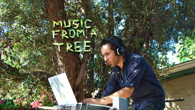 Music From A Tree