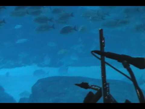 Steven Charles Jazz Trio: Touch by John Klemmer @ Georgia Aquarium in Atlanta