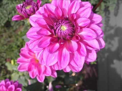 A Flower Album