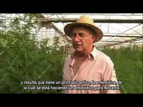 Josep Pamies. La estevia y otras plantas medicinales