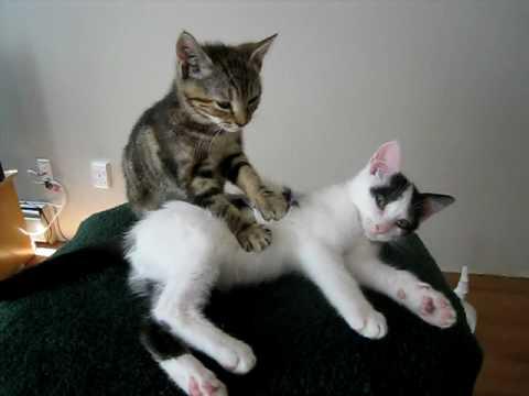 Gato masajista
