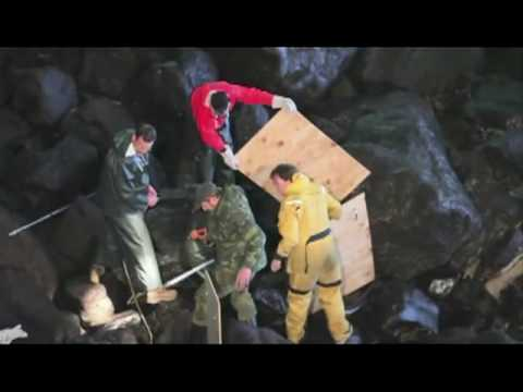 Daring Rescue of Sea Lion