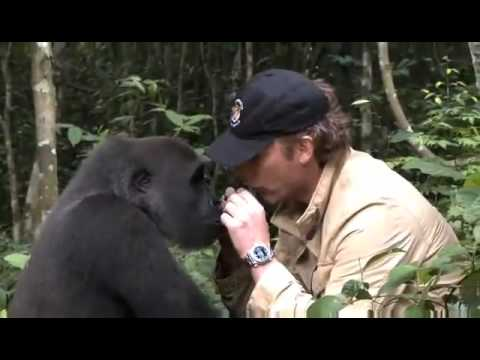 Incredible Video of a Man's Reunion With a Gorilla.