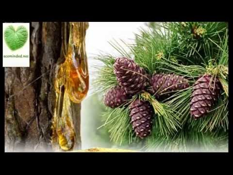 Russian Cedar (Pinus Sibirica) products for natural health care