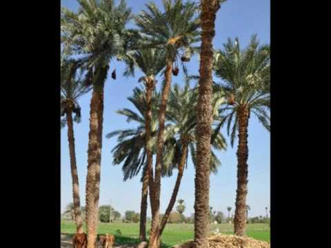 Abydos My Way_1.wmv
