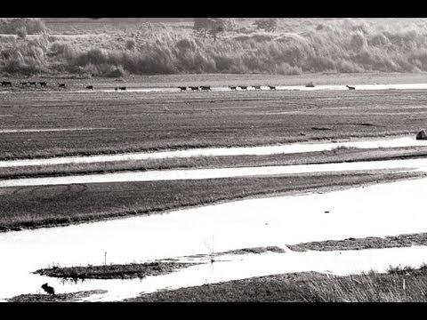 台文戰線聯盟 茄萣溼地保育詩二首 一千隻水鳥飛過的所在 茄萣溼地誠美麗