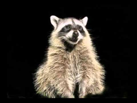 Funny Mother's Day Song (Rosco the Raccoon)