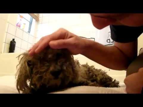 Perro abandonado Obtiene el rescate más bello - El final es hermoso
