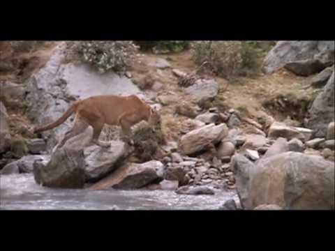 Bear vs Lion w/ Audrye Sessions