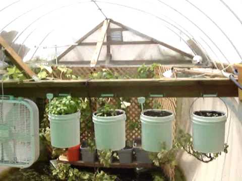 GardenPool.org - Unlimited organic aquaponic food for life from an old backyard swimming pool.