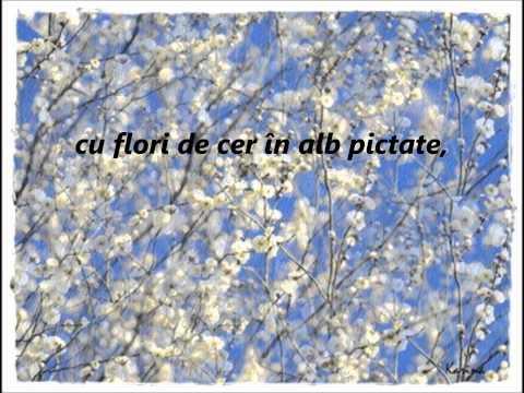 Vreau    Flori de cer    Lavinia Niculicea