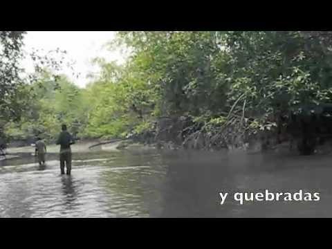 Wild vanilla in Colombia/ Vanilla en el Pacífico colombiano