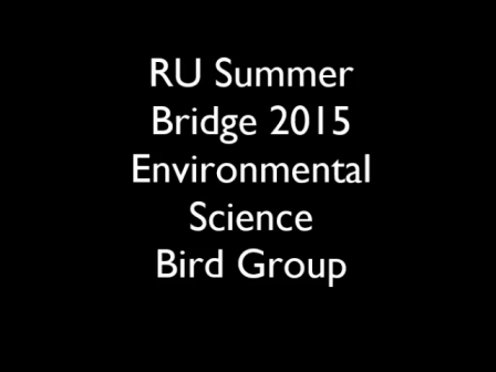 Radford University Summer Bridge Program 2015