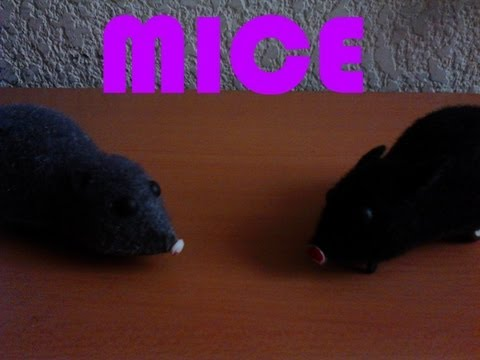 Mice - By Jorge Omar E. C.
