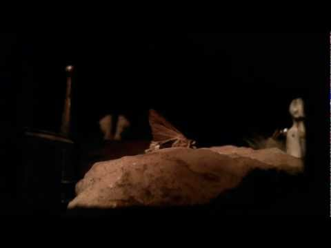 "Stop Motion Animation #3  ""A Moth Boy"""