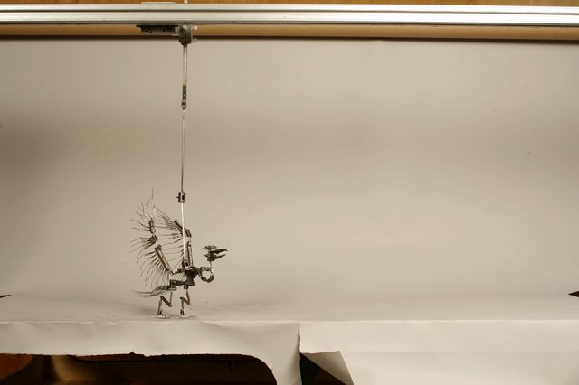 first bird armature animation test