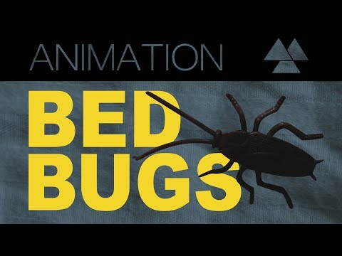 ▲Bed Bugs // STOPMOTION▲