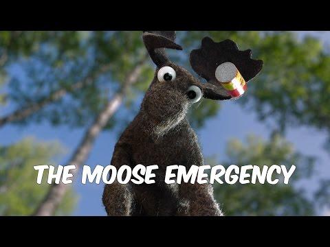 The Moose Emergency