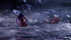 Cadbury Screme Eggs - They're Here