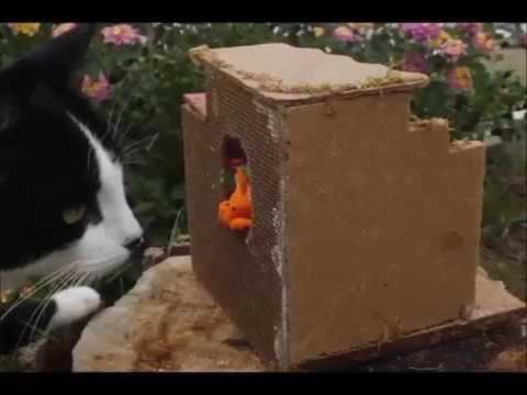 El libro de los Xiyos: Los gatos (outdoors fictional clay animation documentary)