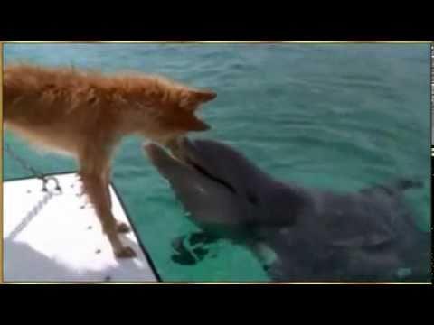 El Perro y el Delfin