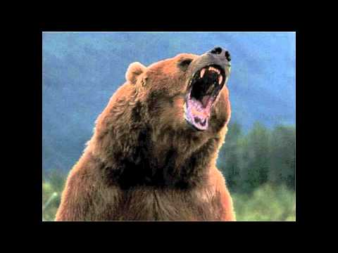 CHEWIN GRIZZLY (BLACK AND YELLOW REMIX).flv