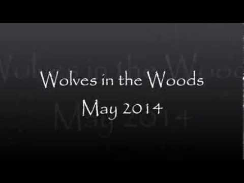 YA fiction, Wolves in the Woods, Trailer