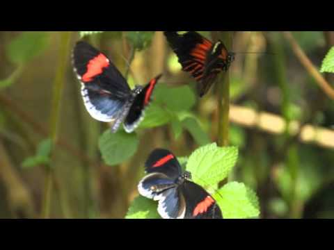 "The Official Video ""Float Like a Butterfly, Sting Like a Bee"" by Flashmob Butterly"