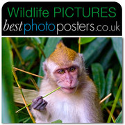 Macaque feeding in the rainforest canopy