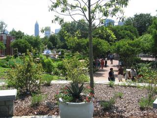 Margaret and Randolph Thrower Sweetbay Magnolia Grove at the Atlanta Botanical Garden
