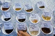 Seeds Festival - Γιορτή των Σπόρων