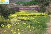 Πεζοπορία: Αγ.Πακού Αρχαία Λατομεία Αγ.Μηνά Θαψανά Κακάπετρα Παροικιά / Hike from Kostos, Marathi, Ag. Minas, Kakapetra & Parikia