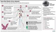ebola_virus_attacks