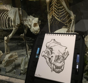 Sketching with Skeletons!